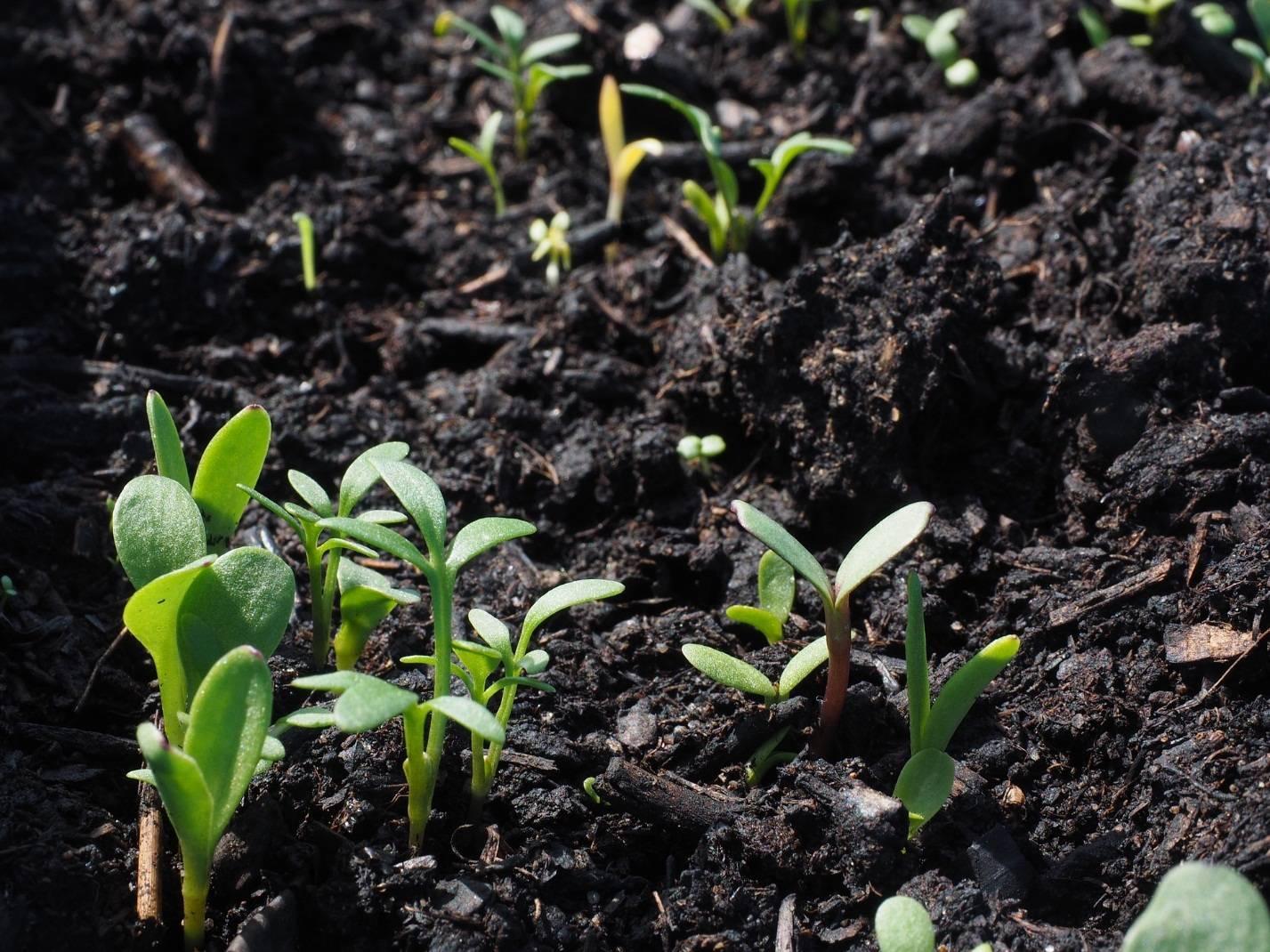 Есть вопрос: для чего нужны хелатные удобрения и чем они лучше обычных