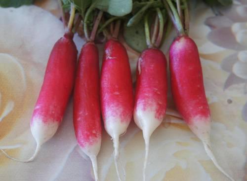 Редис французский завтрак: отзывы, фото, урожайность, выращивание в теплице