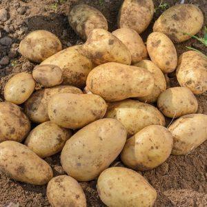 Картофель айл оф джура отзывы