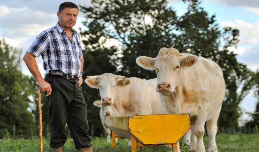 Цистицеркоз коров