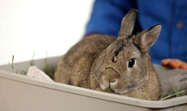 Болезни кроликов, опасные для человека: описание, фото, лечение