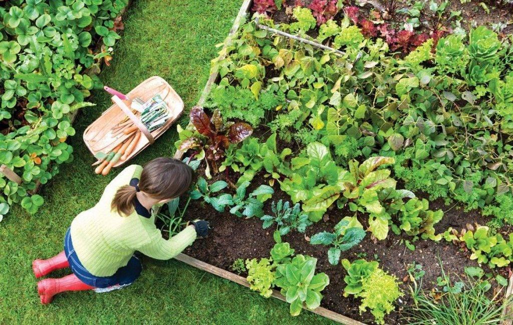 Памятка новичка-огородника: что и после чего можно сажать на огороде