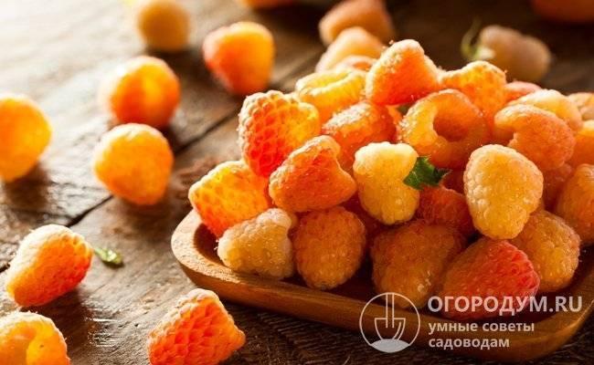 Малина «оранжевое чудо»: описание сорта, фото, отзывы
