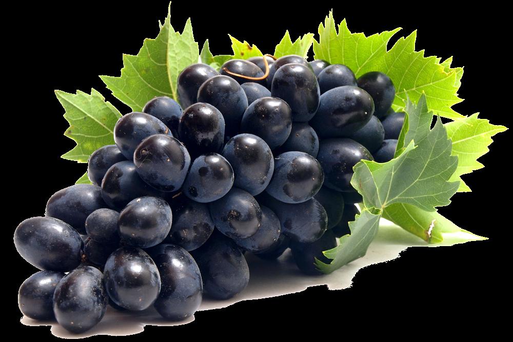 Как защитить виноград от болезней и вредителей: препараты для обработки и их отличия