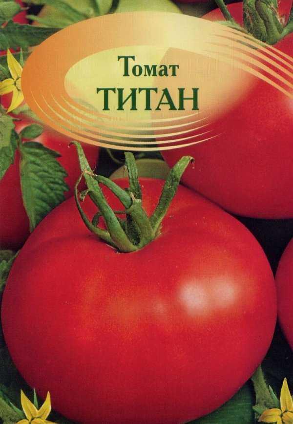 Сорт томата «титан»: описание и основные характеристики