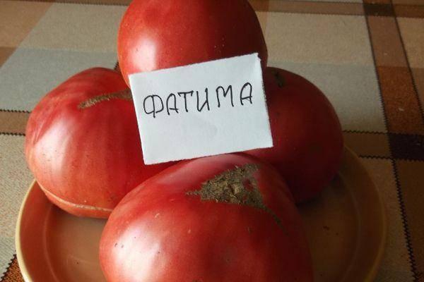 Томат «моя любовь f1»: описание и характеристика, урожайность сорта