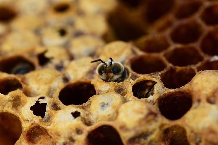 Причины роения пчел и методы его предотвращения