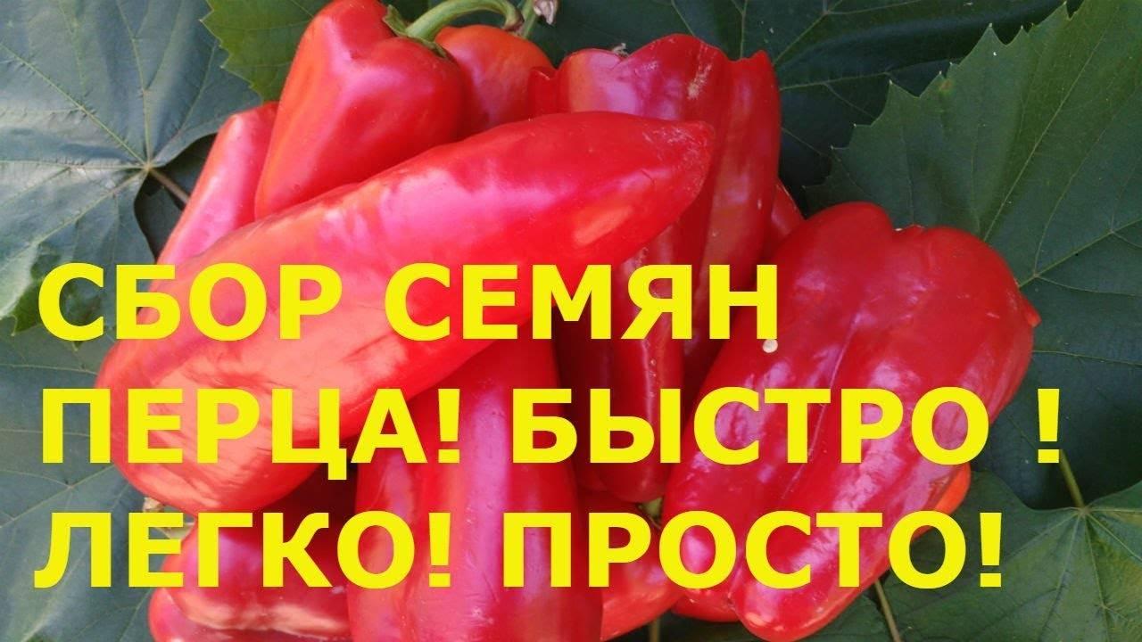 Как собирать семена перца болгарского