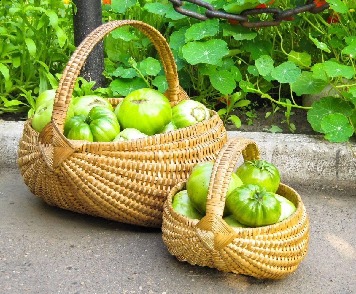 Дозревание зелёных помидоров – как ускорить процесс покраснения