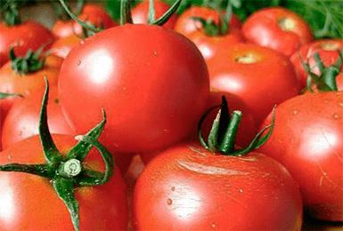 Томат волгоградский скороспелый 323: описание, урожайность и отзывы