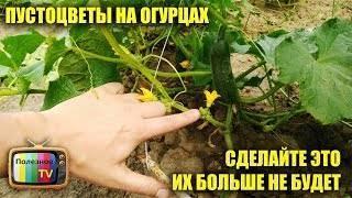 Пустоцвет на огурцах — причины обильного появления, народные средства и особенности выращивания в домашних условиях (100 фото)