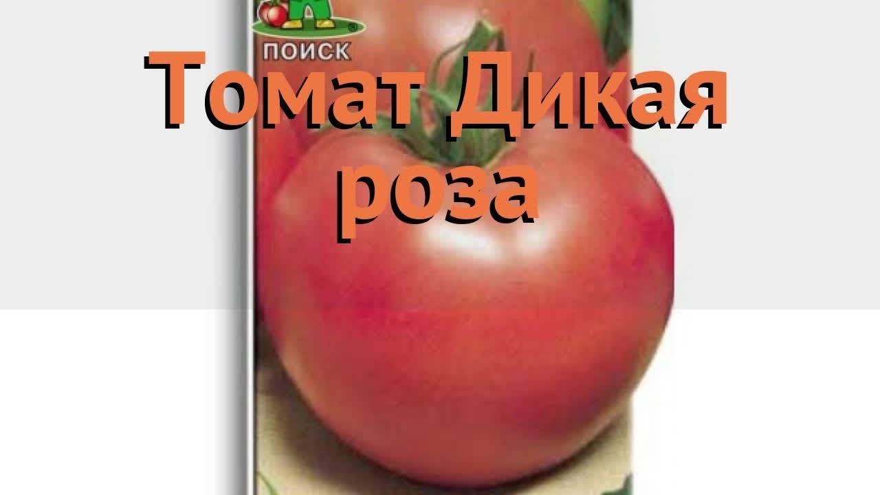 Сорт томата дикая роза: характеристика и отзывы огородников