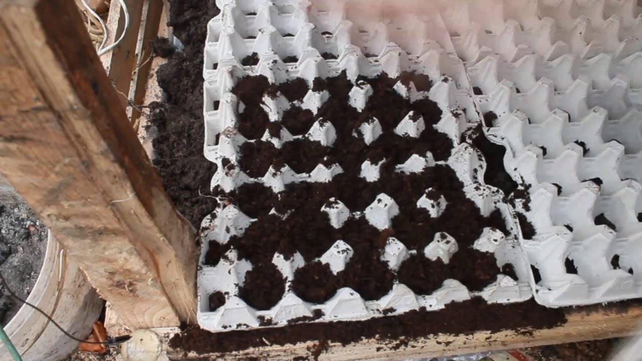 Как и когда садить редиску, чтобы получить хороший урожай