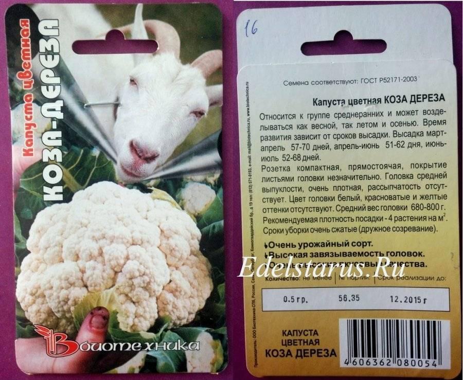 Секрет богатого урожая цветной капусты на урале в открытом грунте — правильно подобранный сорт. советы по выращиванию и уходу