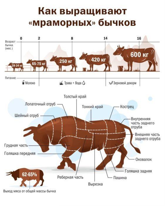 Чем опасен отек вымени у коров, и как его вылечить?