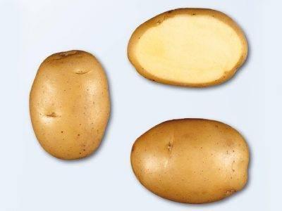 Описание картофеля Балтик Роуз