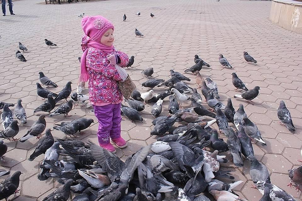 Какие опасные для человека болезни переносят голуби