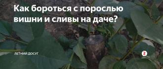 Как избавиться от поросли вишни: правила удаления с участка своими руками