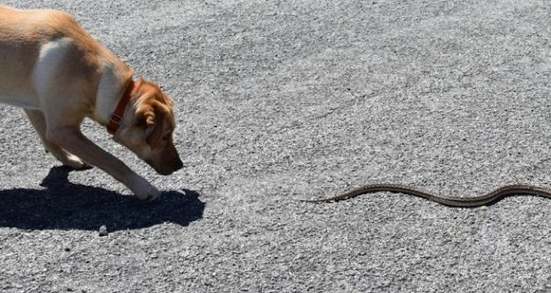 Собаку укусила пчела или оса: первая помощь, возможные последствия |  ветеринарная служба владимирской области