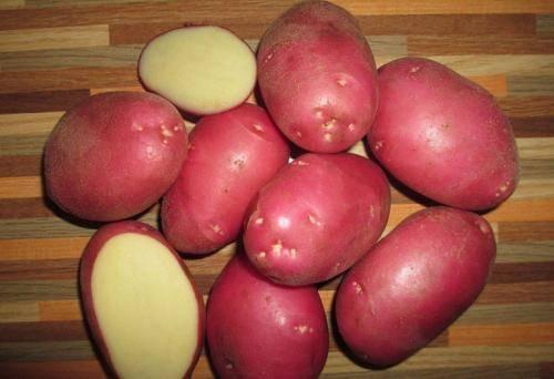 Картофель киви: описание сорта и характеристика, посадка и уход, отзывы с фото