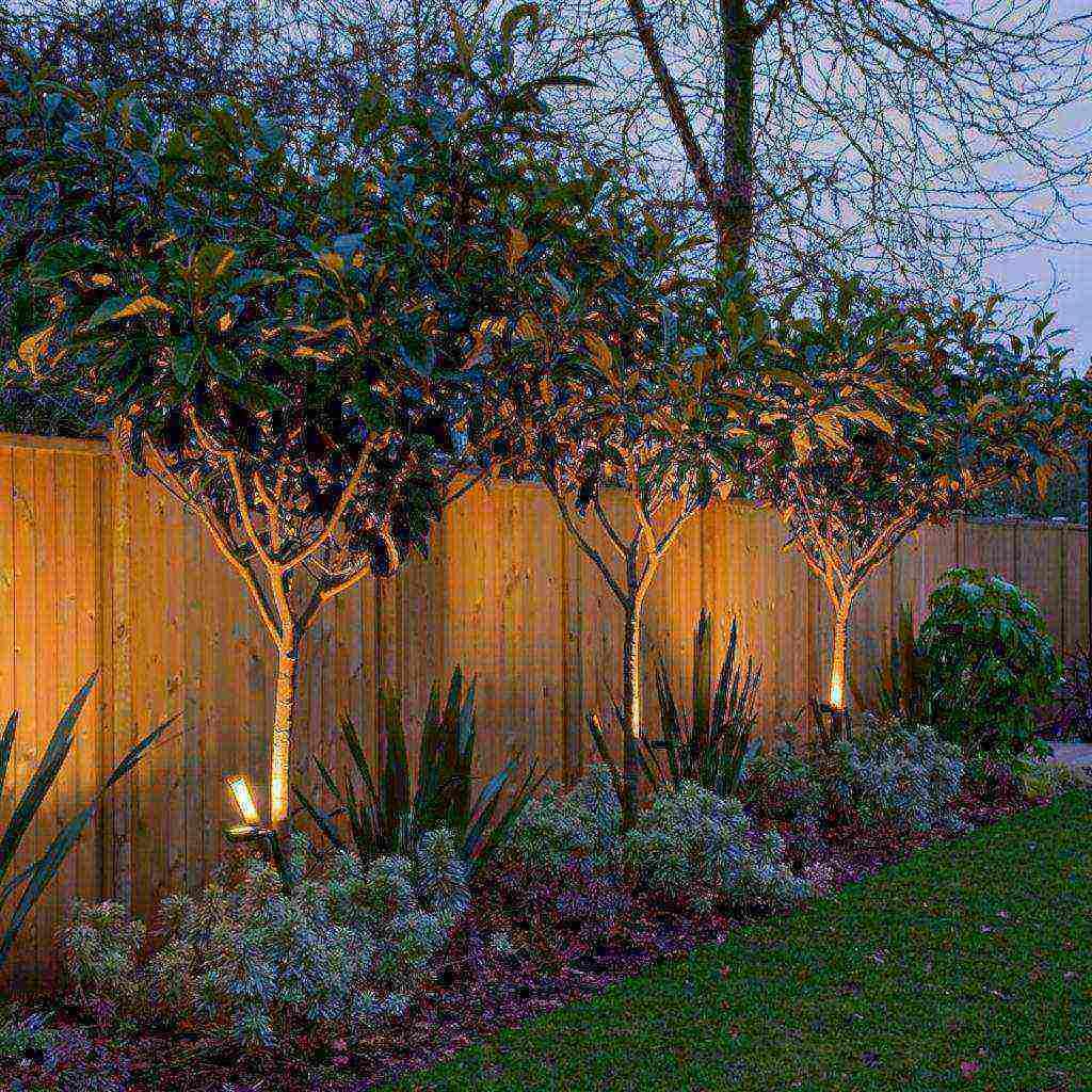 Опасное соседство: никогда не сажайте эти деревья и кустарники рядом!