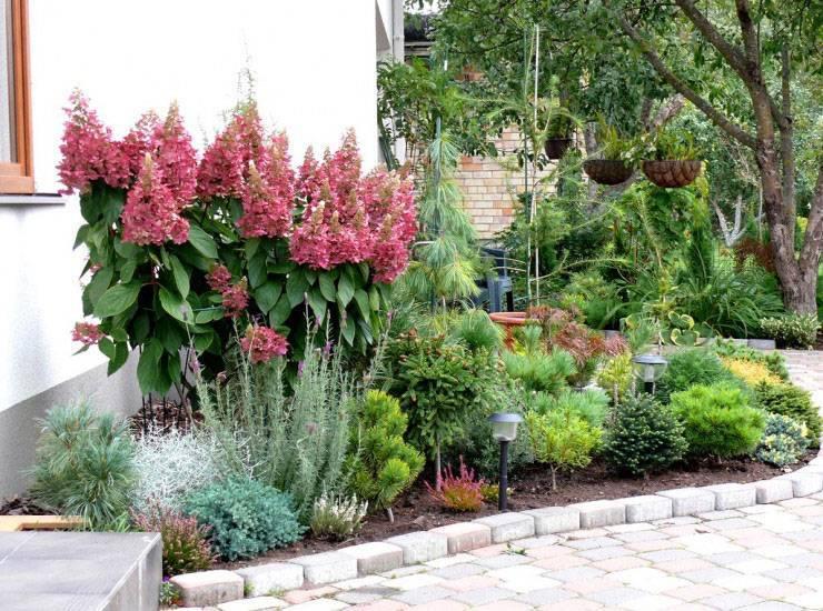Гортензия в ландшафтном дизайне – где и как вырастить красивые цветы?
