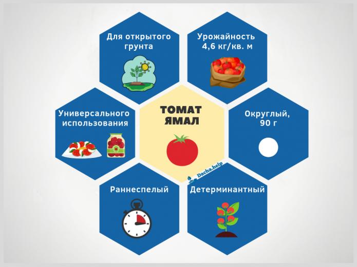 Томат дачник: описание раннего и простого в уходе сорта томатов