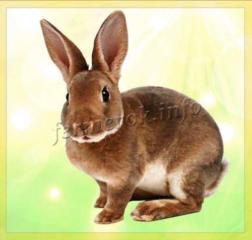 Особенности кроликов породы рекс