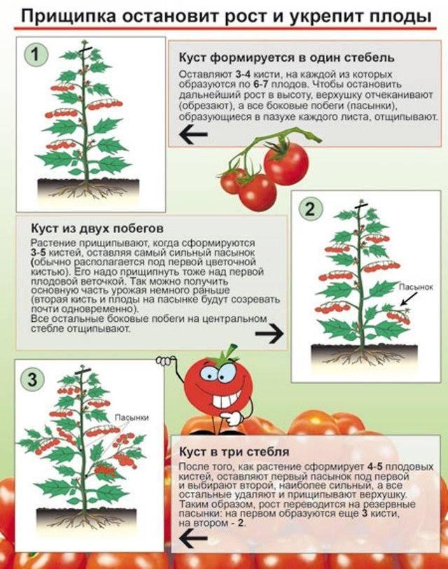 Пошаговое руководство по выращиванию помидоров черри: соблюдаем правила и получаем отличный урожай