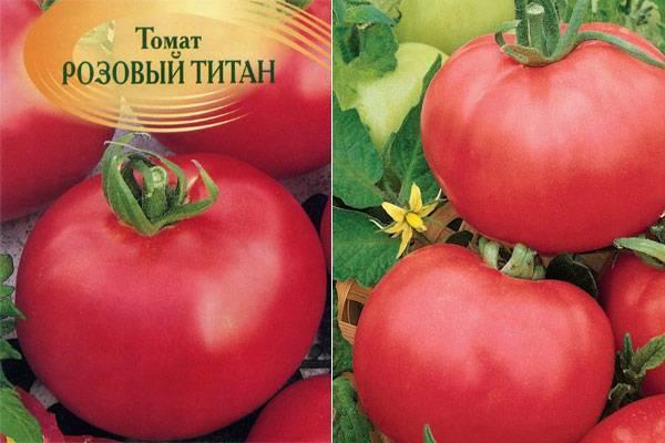 Томат розовый титан: характеристика и описание сорта с фото