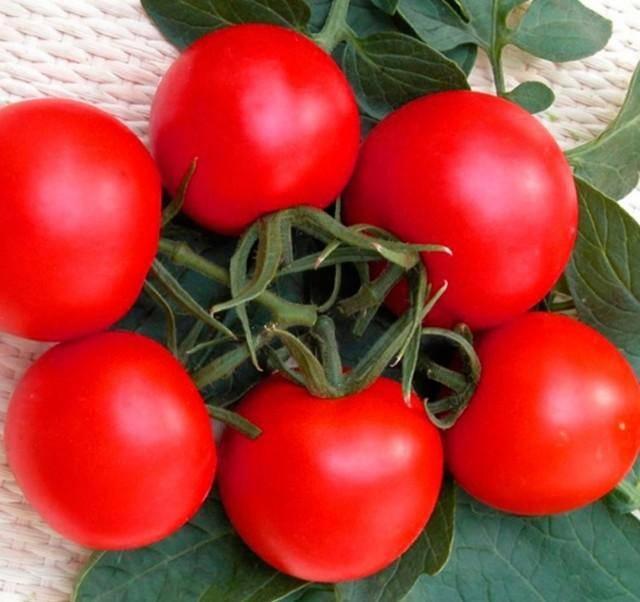 Идеальный для теплиц, раннеспелый и высокоурожайный томат «благовест»: как выращивать его правильно