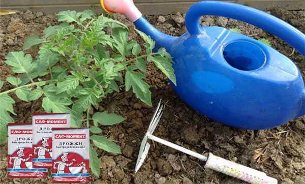 Подкормка помидоров дрожжами: рецепты с золой, с сахаром. новинки дрожжевого питания томатов