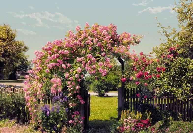Розы в дизайне сада: подбор растений и сочетание с другими цветами
