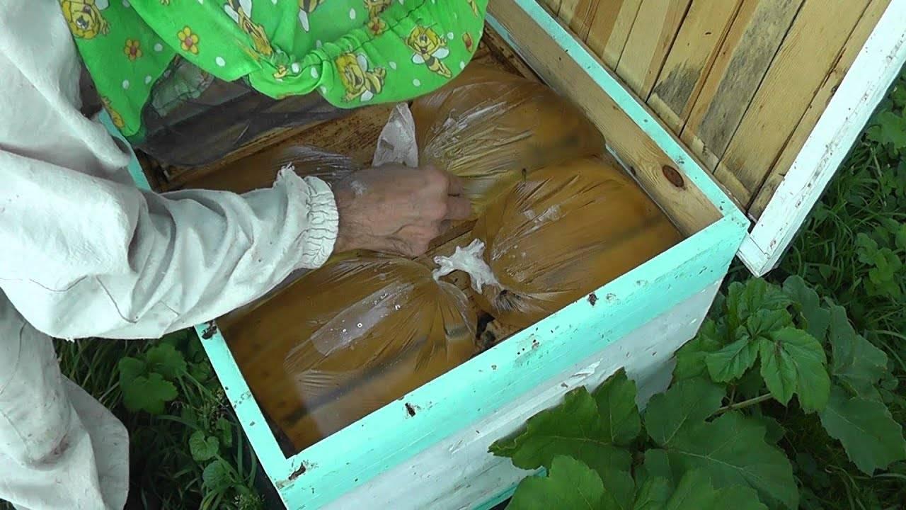 Основные правила подкормки пчел осенью. кормим правильно – зимуем удачно