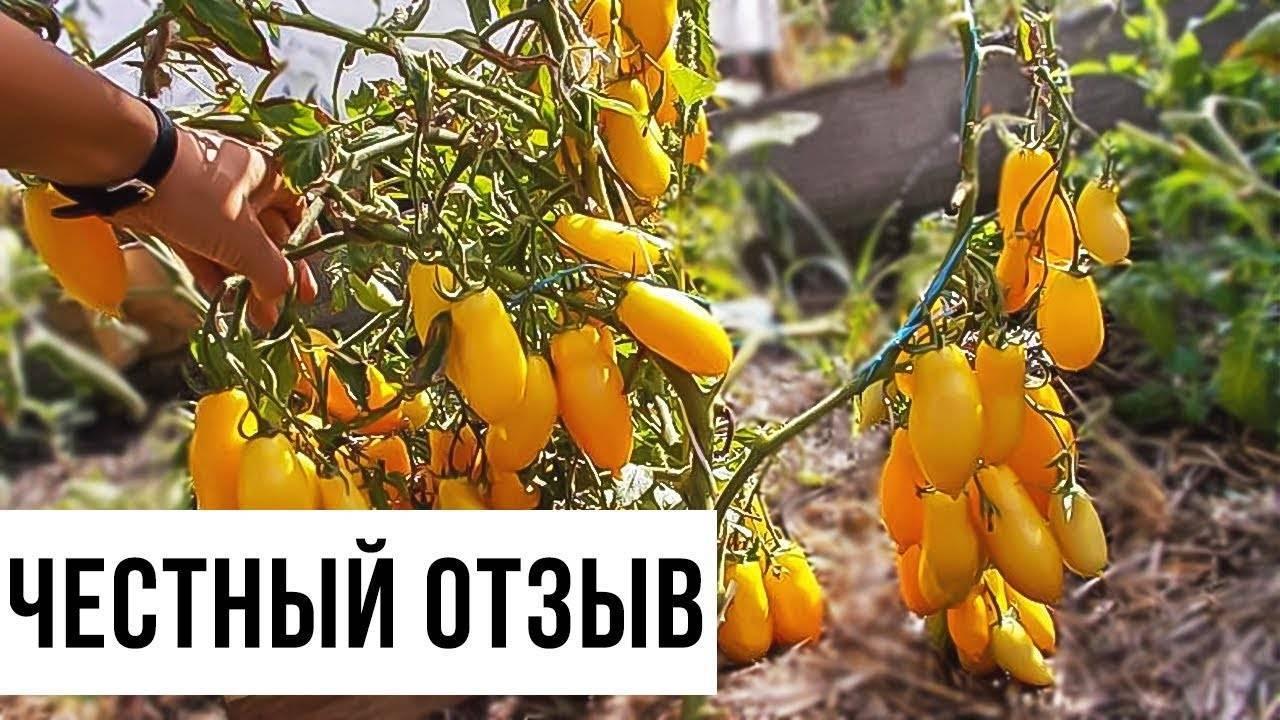 Томат банановые ноги: описание сорта, урожайность, отзывы, фото