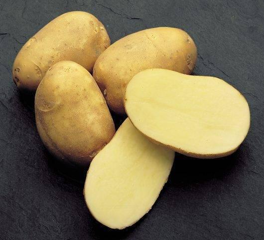 Картофель инноватор: характеристика и описание сорта