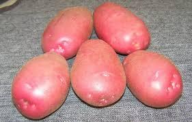 Картофель дофине — описание сорта, фото, отзывы, посадка и уход