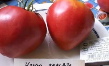 Характеристика томатов сорта чудо