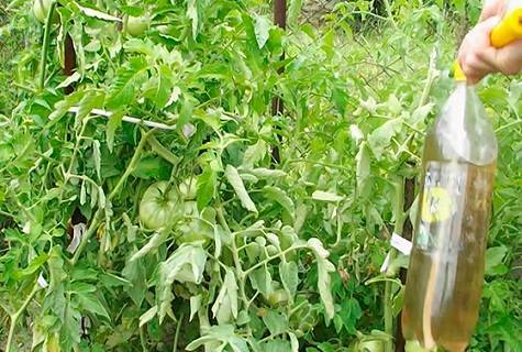 Как правильно обрабатывать капусту уксусом от вредителей