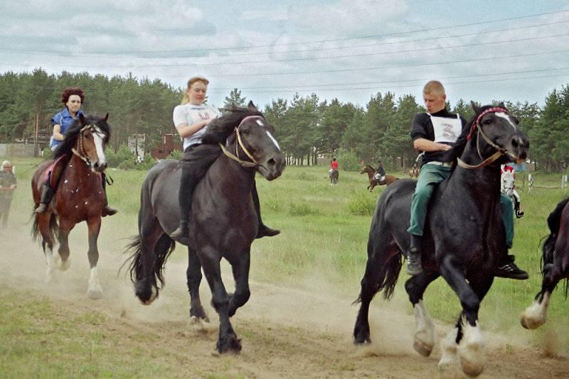 Порода лошадей владимирский тяжеловоз