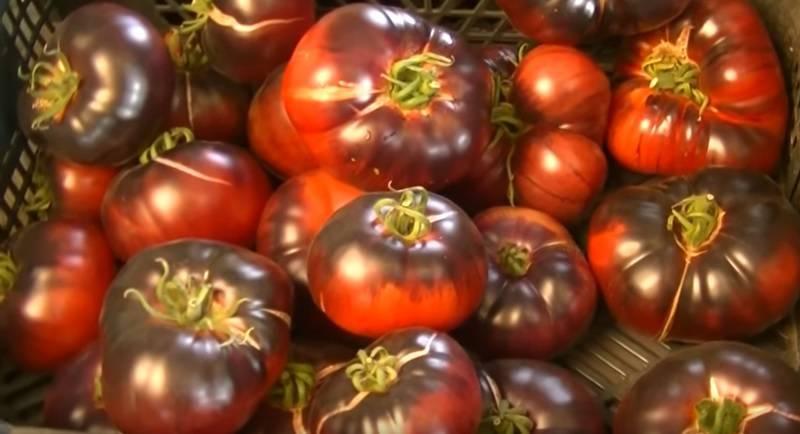 Томат аметистовая драгоценность отзывы фото урожайность