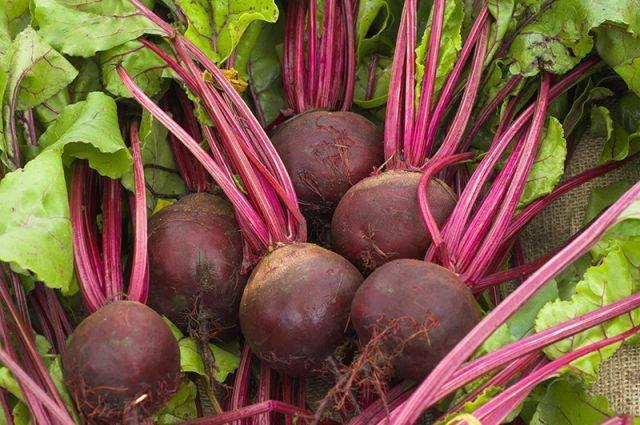 Полезные и вредные свойства вареной свеклы, химический состав и калорийность продукта. как готовить и есть овощ?