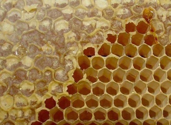 Забрус – целебный продукт пчеловодства. как лечиться – рецепты с забрусом и правила хранения