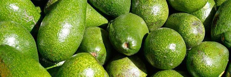 Диетические блюда с авокадо: простые рецепты - все про диеты