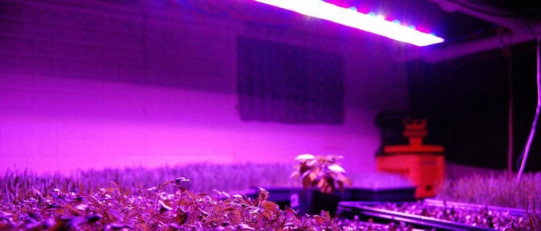 Подсветка рассады в домашних условиях: обзор ламп, пример сборки