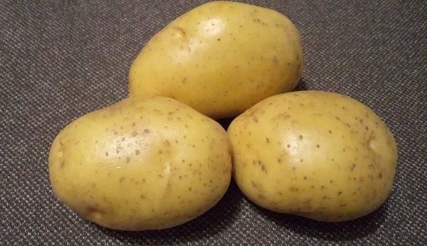 Картофель джувел: описание особенностей сорта, способы выращивания