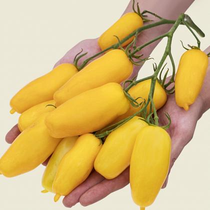 Сорт томата банановые ноги