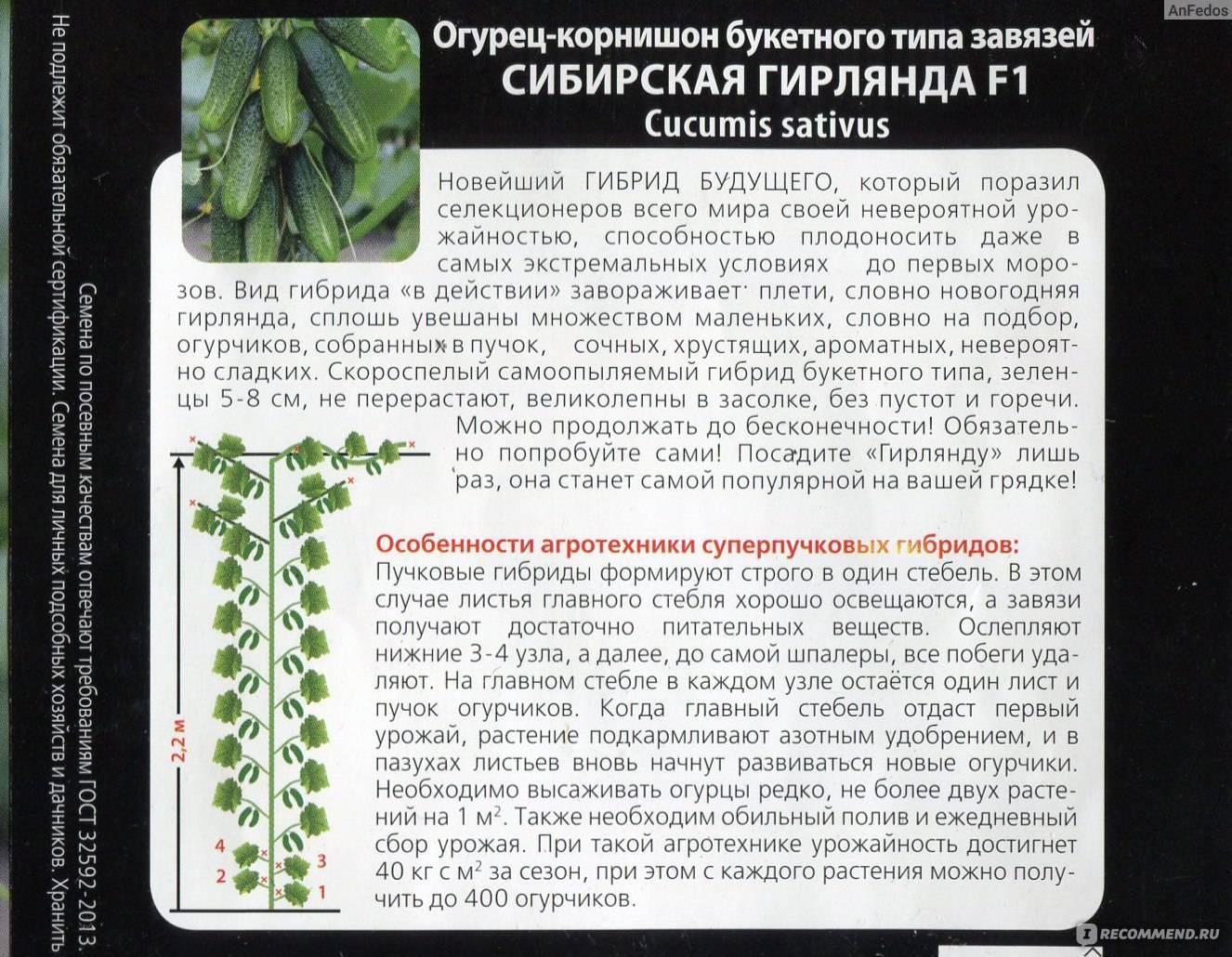 Огуречный праздник с сибирской гирляндой