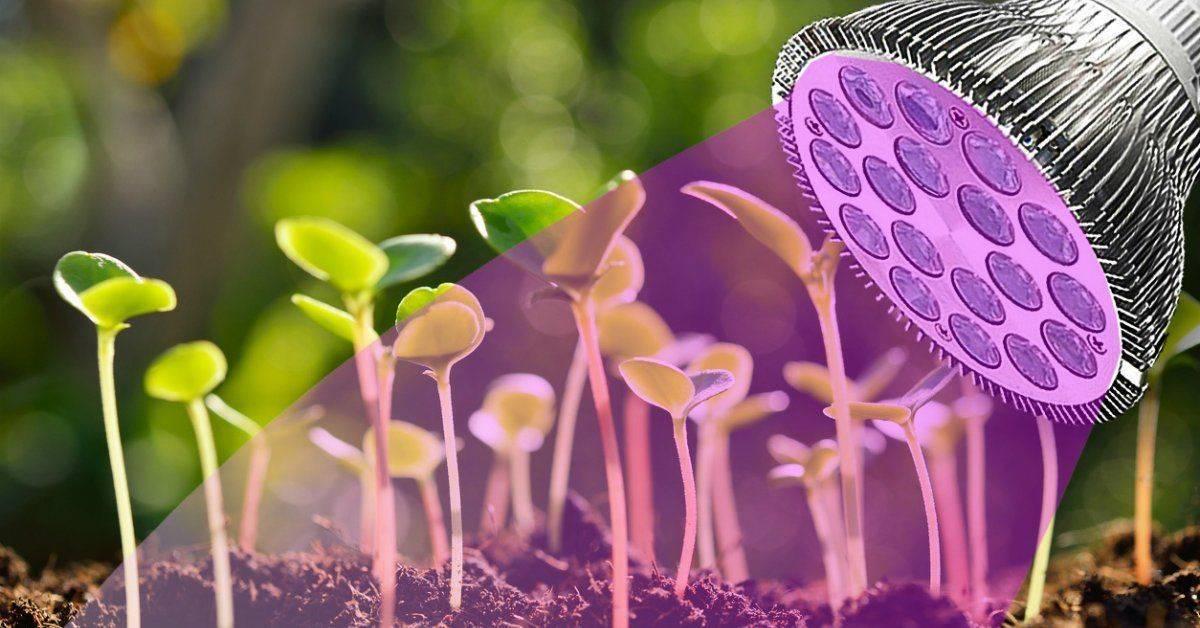 Лампа для выращивания рассады обзор видов и особенности процесса досвечивания