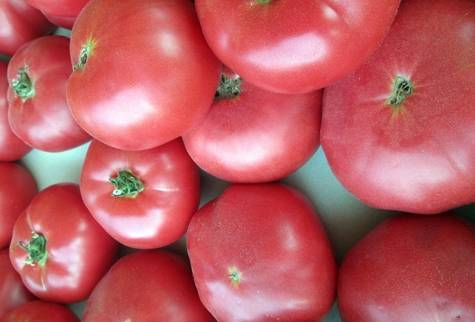 Устойчивый и ранний томат катя. характеристики гибрида и агротехника